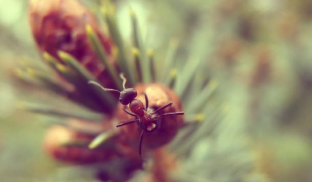 ant-610x357